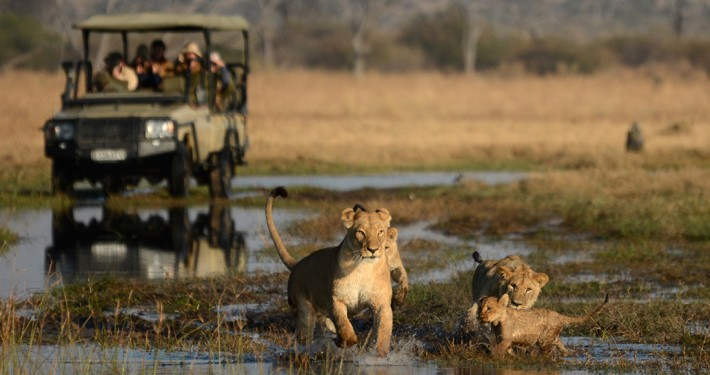 Camp Savuti - Safari