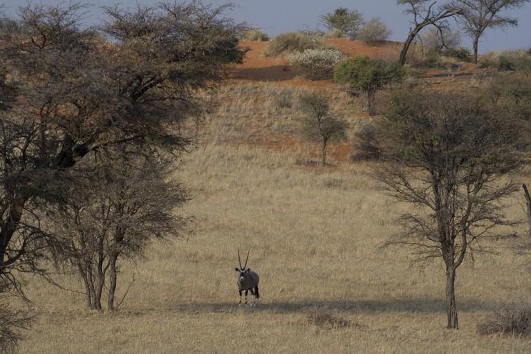 Kalahari - Namibia