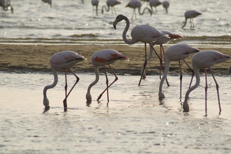 Namibia - Flamencos en Walvis Bay