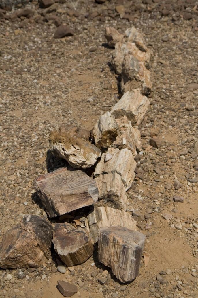 Bosque Petrificado - Namibia