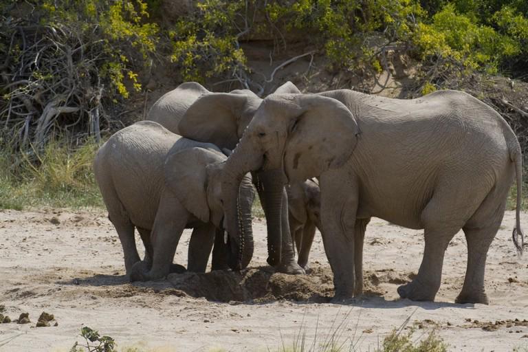 Namibia - Elefantes del Deiserto