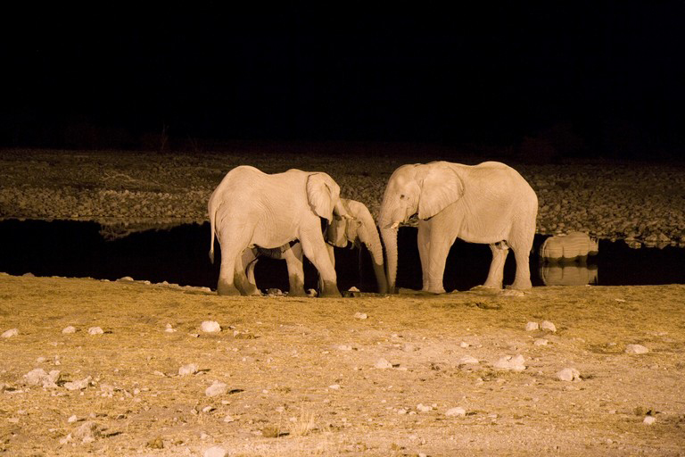 Paarque Nacional Etosha - Namibia