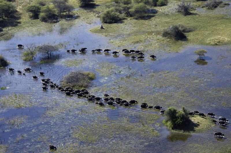 Vumbura Plains - Delta del Okavango