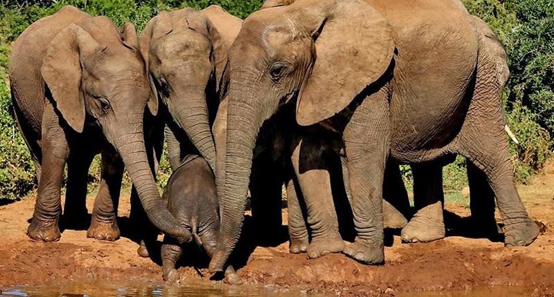 Addo Elephant N.P