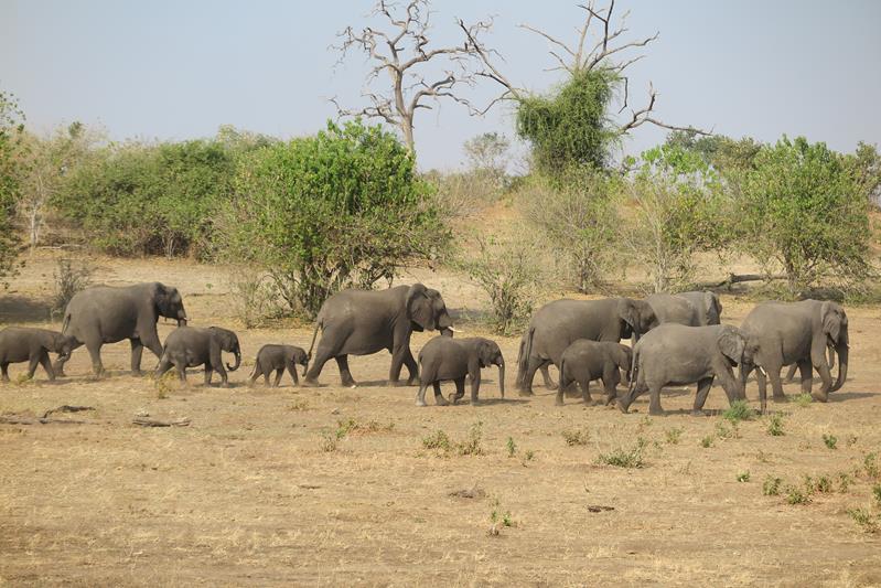 Safari en Chobe