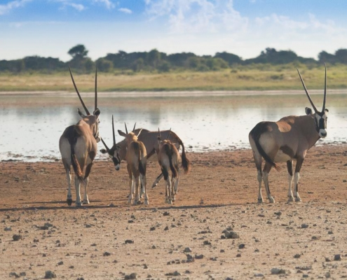 Botswana Safari Movil Semana Santa