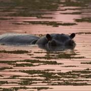 Botswana-hipo