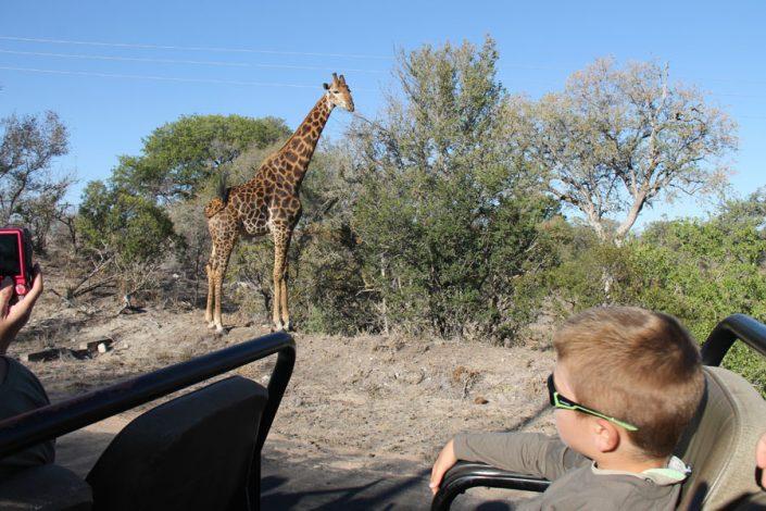 viajar a sudafrica con niños