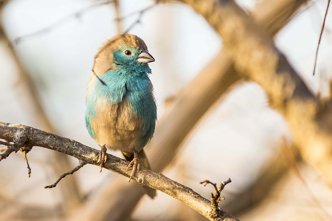 Green Season en Botswana