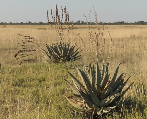 Makgadikgadi - Salar de Sowa