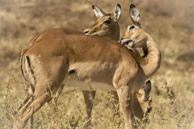 Botswana: Safari Movil Jun 2018