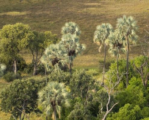 Vuelo Helicoptero Delta Okavango