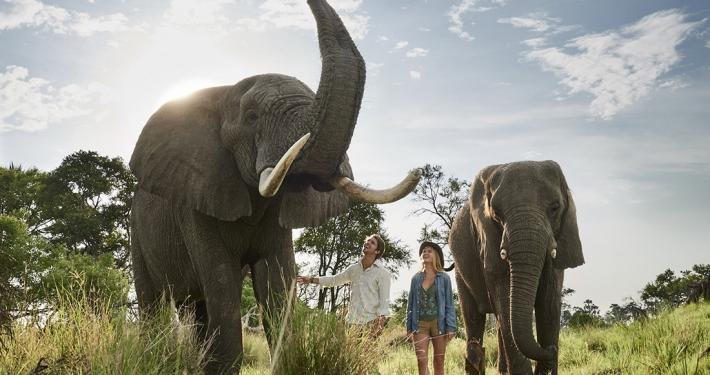 Interacción con elefantes