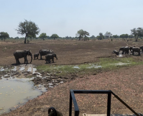 Elefantes en Luangwa House