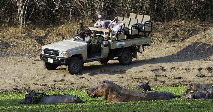 Safari - Flatdogs Camp