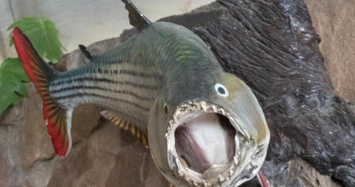 Pesca en Redcliff Zambezi Lodge
