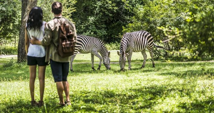 Jardines de Avani Victoria Falls Resort