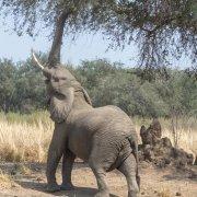 Viaje Zambia 2019 - Lower Zambezi
