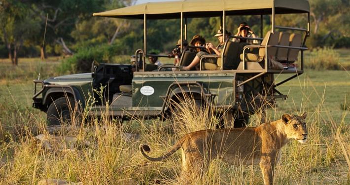 Safari - Chindeni Bushcamp