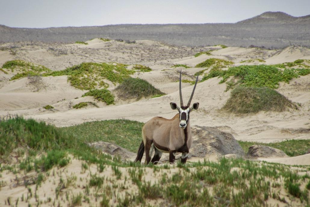 Costa de los Esqueletos - Namibia