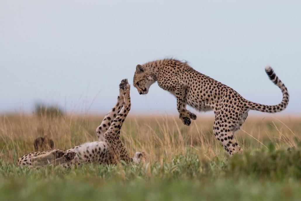 Safari en Time + Tide King Lewanika - Liuwa Plains