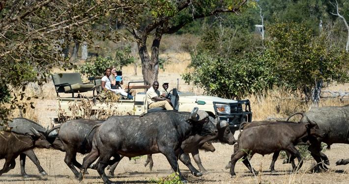 Safari en 4x4 Nkwali Camp
