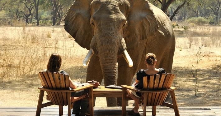 Elefante frente a uno de los chlaets - Old Mondoro Camp
