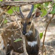 Safari Kafue - Bushback