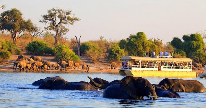 Elefantes en el río Chobe
