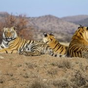 Tiger Canyon - Free State - Sudafrica