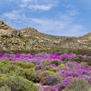 Namaqualand - Cabo Norte - Sudafrica