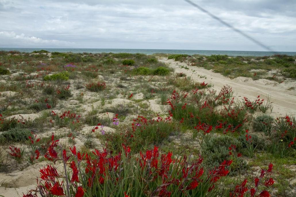 West Coast - Western Cape - Sudafrica