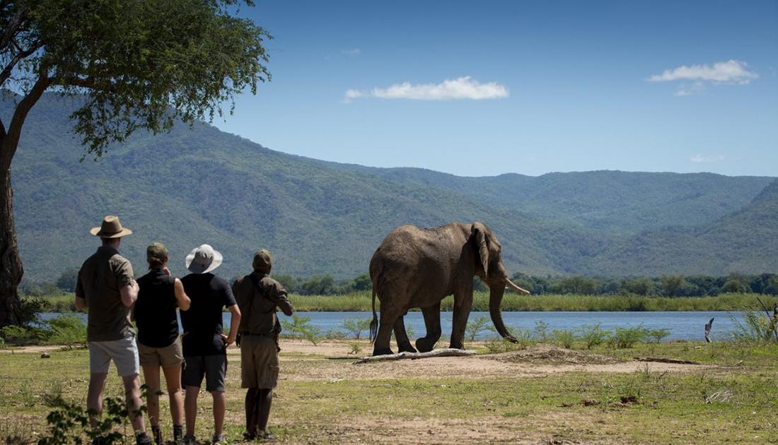 Safari a pie - Nyamatusi Camp - Mana Pools